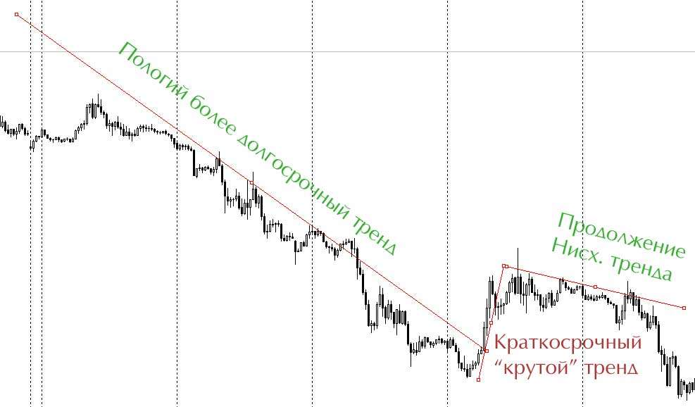 pologii-trend